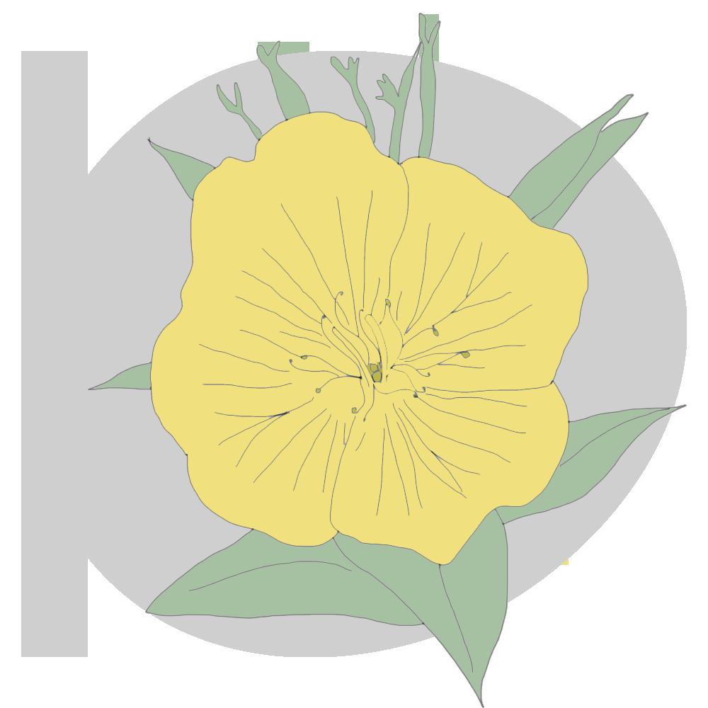 evening-primrose-copy.png