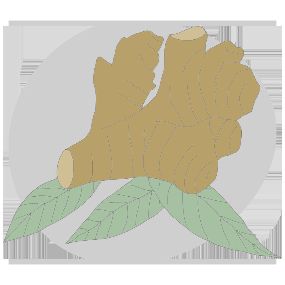 ginger.png
