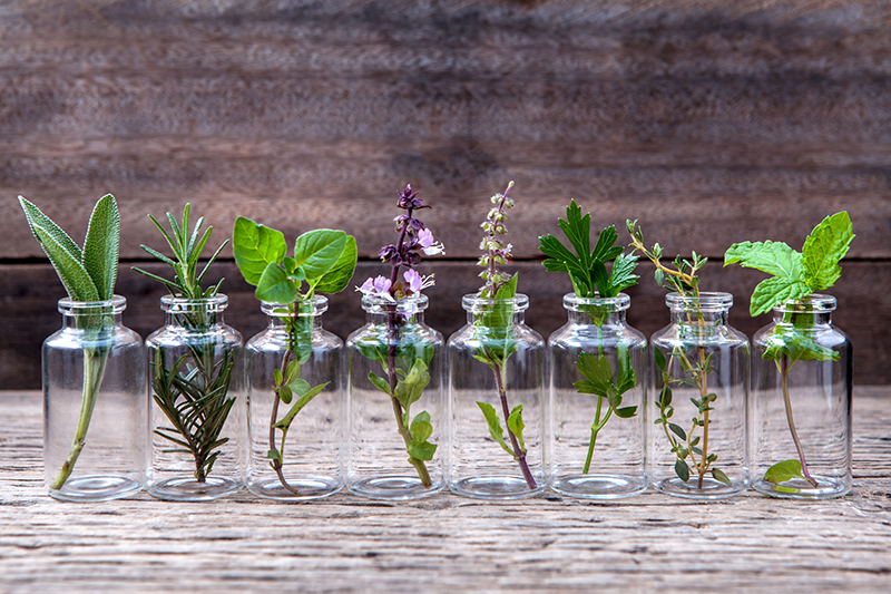 plants-in-bottles-small.jpg