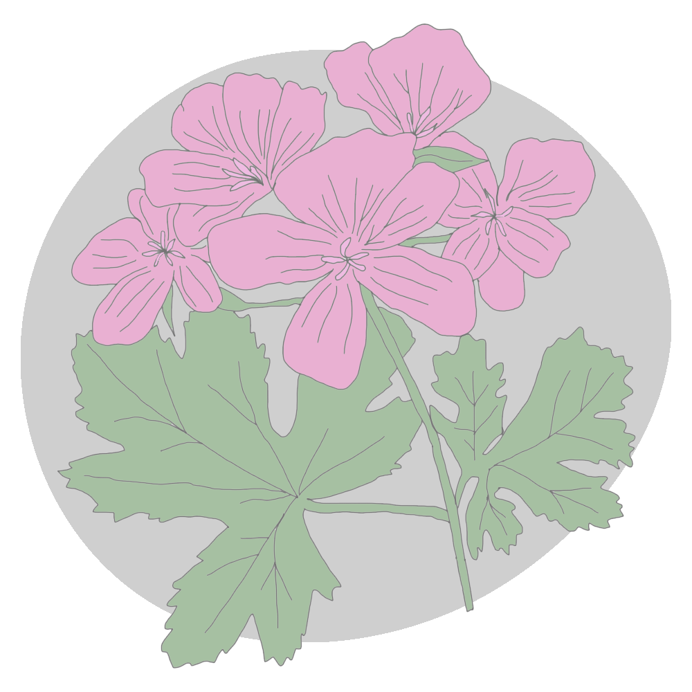 rose-geranium.png