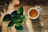 No Storm in a Tea Cup - How Climate is Changing our Cuppa