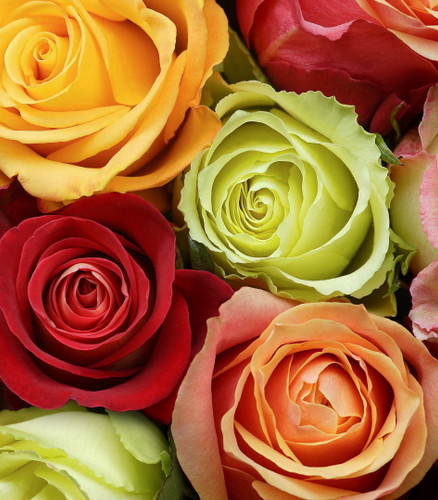 Fresh Pick of the Day - Mixed Roses Bouquet