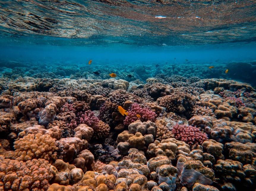 The Plight of Reefs