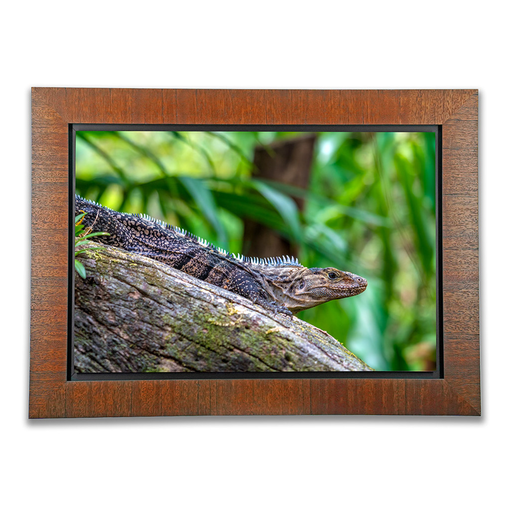 Metal Print with Tahiti Wood Frame, front view. Wildlife photography by Teresa Lutz.