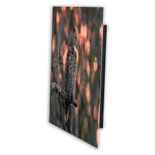 Metal print with Black Gallery, recessed frame, angled view. Wildlife photography by Jeff & Wendy Photography.