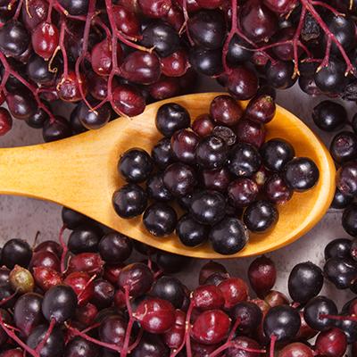 Elderberry & Immune Support