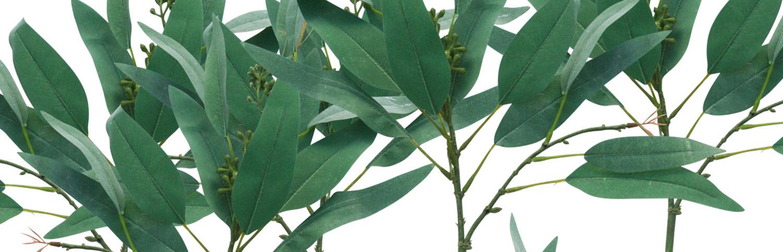 seeded-eucalyptus1banner.jpg