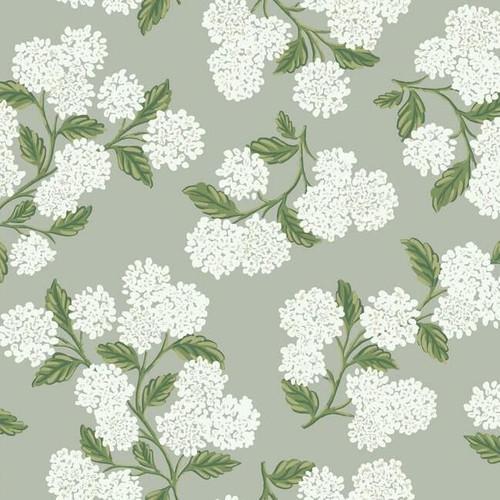 White hydrangeas on a gray wallpaper.
