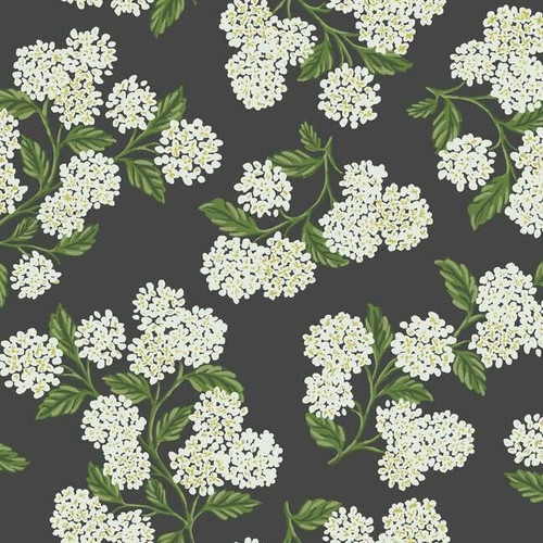 White blooming hydrangeas on black wallpaper.