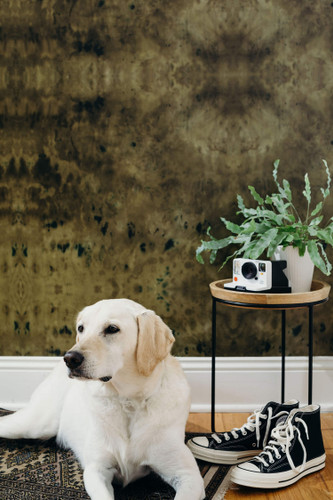 A dog sitting in front of rich green wallpaper.