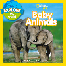 Explore My World Baby Animals (Paperback)