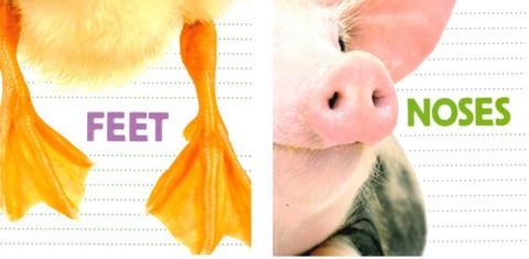 What  Animal? Set of 2 (Paperback)