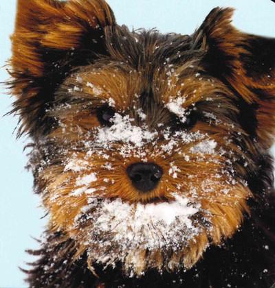 Winter Fun (Chunky Board Book)