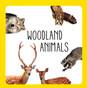 Woodland Animals (Board Book)