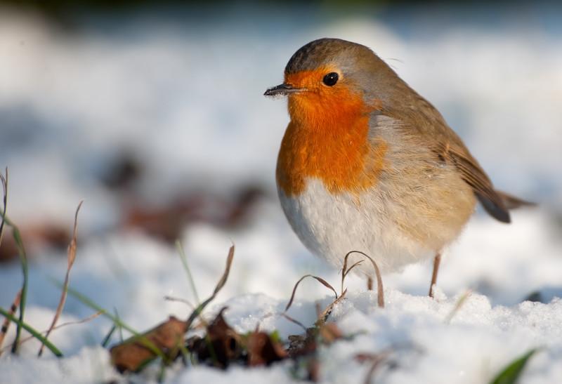 birds-in-winter.jpg