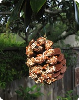 pine-cone-bird-feeder.jpg