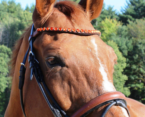 Browband Option #16:  Tangerine.