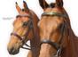 Original Pink Equine Horse Bridles