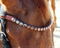 Bespoke, Design Your Own Square Crystal Custom Browbands | Perfect Square Halts Gala by Beasties™