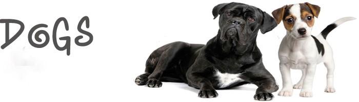 dogsfrontpage.jpg