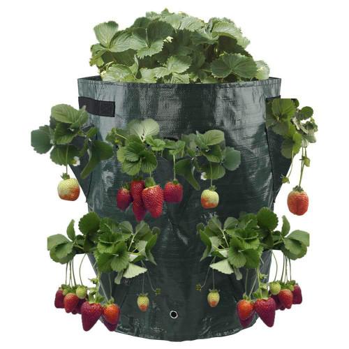 Multi-pocket PE heavy duty Berry plant bag
