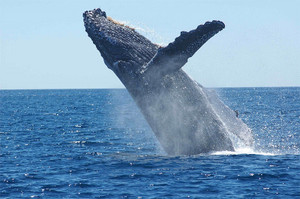 Whale Migration & Approach Guidelines