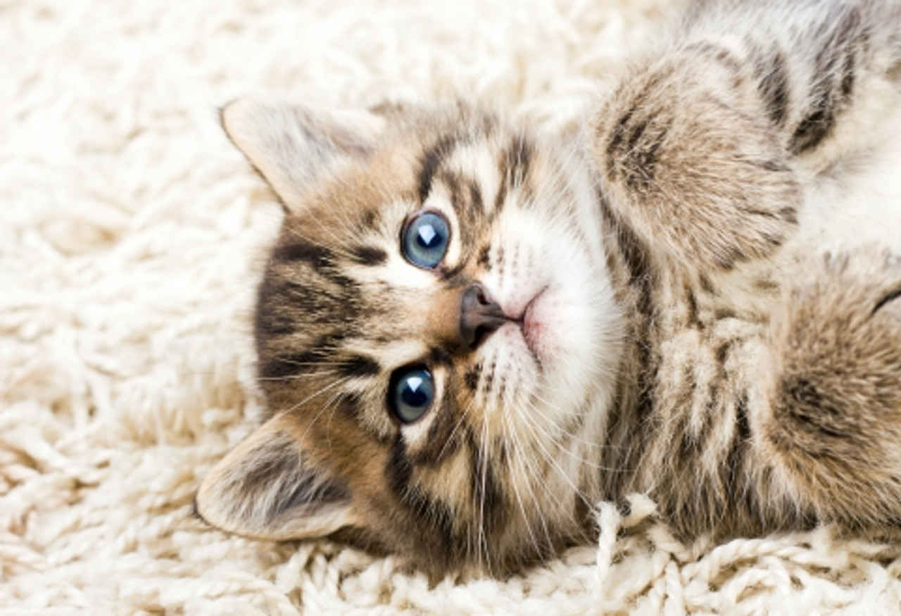 Essential Oils and Your Cat: What You Need to Know
