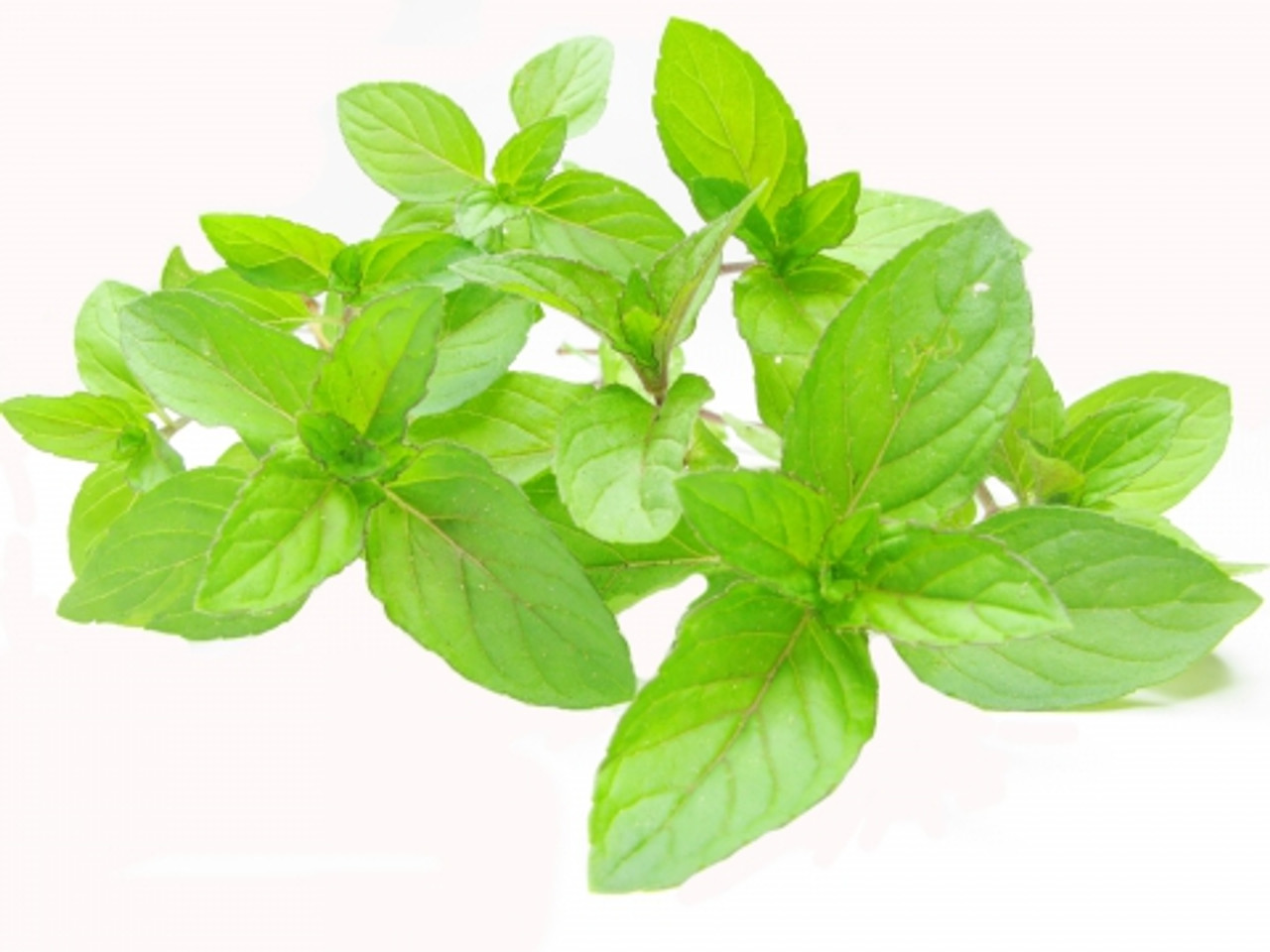 Peppermint Therapeutic Essential Oil