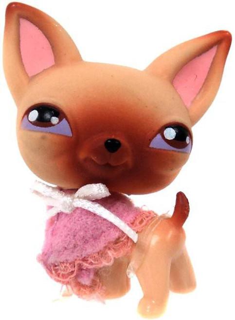 Littlest Pet Shop Chihuahua Figure [Loose]