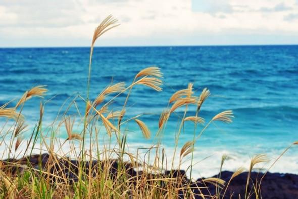 Ocean Breeze Fragrance