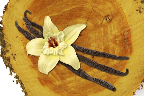 Cedarwood Vanilla Fragrance