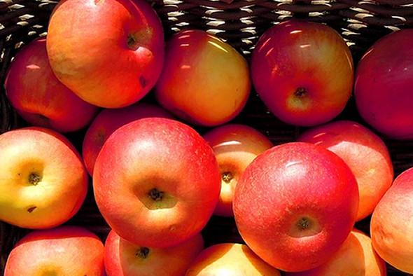 Farmstand Apple Fragrance