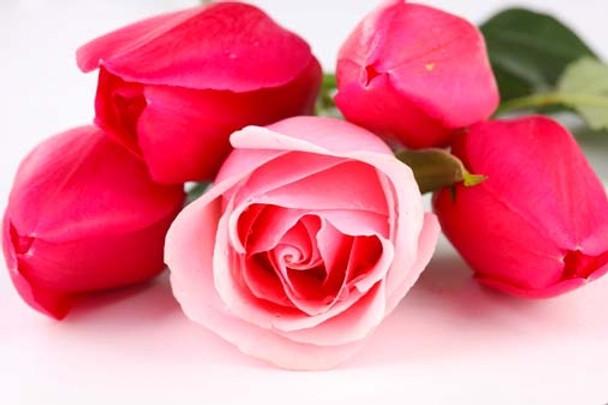 Fresh Cut Roses Fragrance