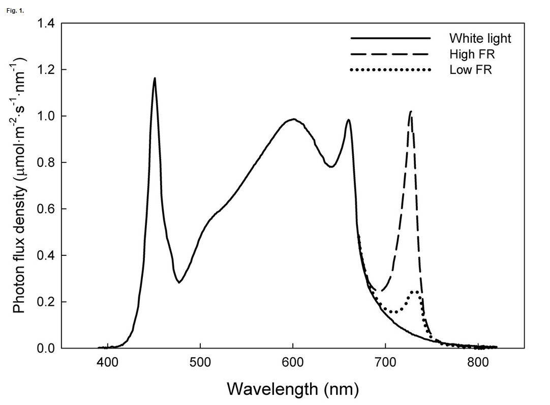 Spectral distribution of white light-emitting diode (LED) bars with added low or high amounts of far-red FR light