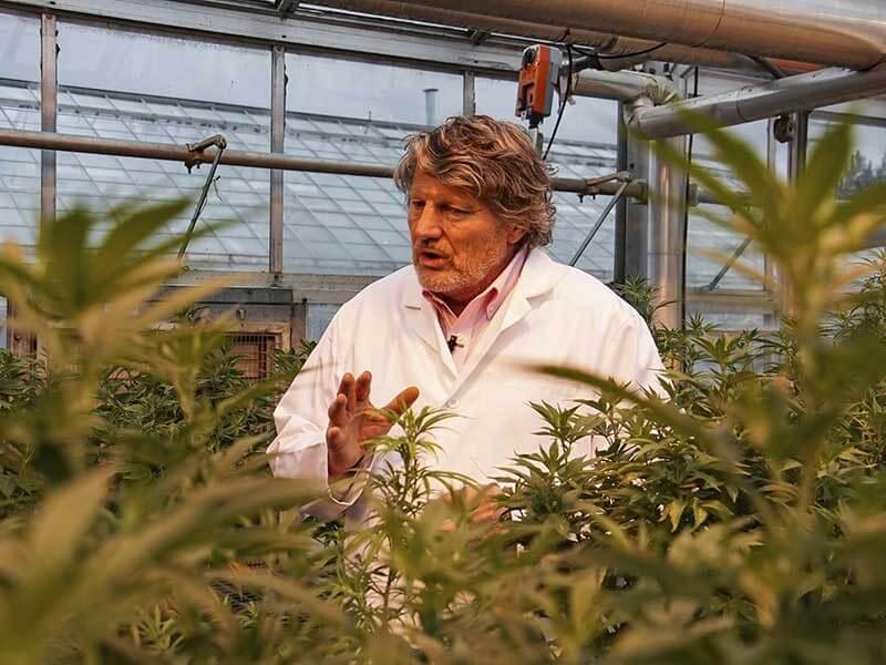 尖端大麻(大麻)研究