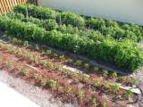 Best Ways to Use Neem in Your Garden
