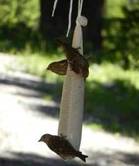 Finch Feeder Bags
