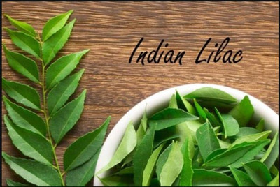 Neem -Indian Lilac- Benefits of Neem for Skin
