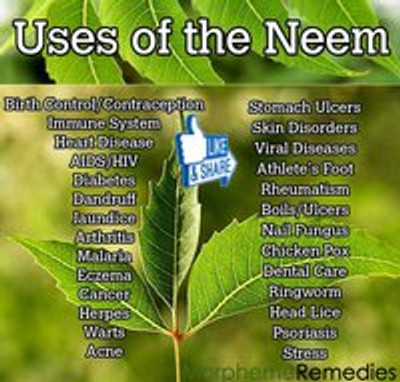 What is Neem Used For? Why Should I use Neem?