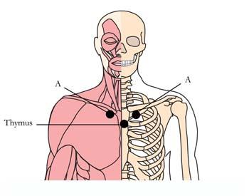 os-10-tachyonized-cold-flu-remedy-cell-points.jpg