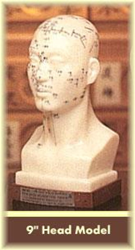 """Head Acupuncture Model 9"""""""