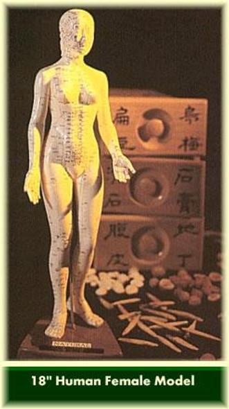 Acupuncture Female Model 18