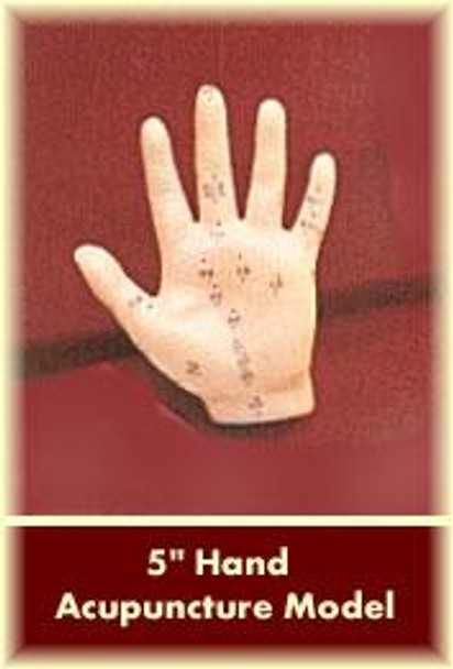 """Hand Acupuncture Model 5"""""""
