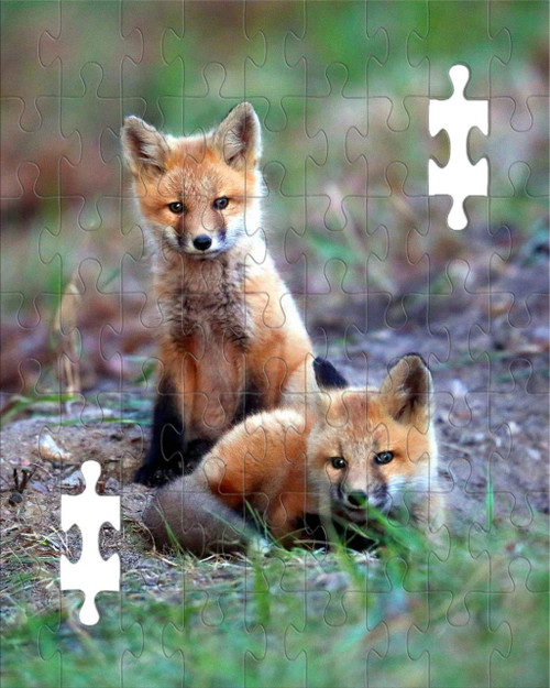 Puzzle - Fox Kits in Ely, MN by Eric Sherman -