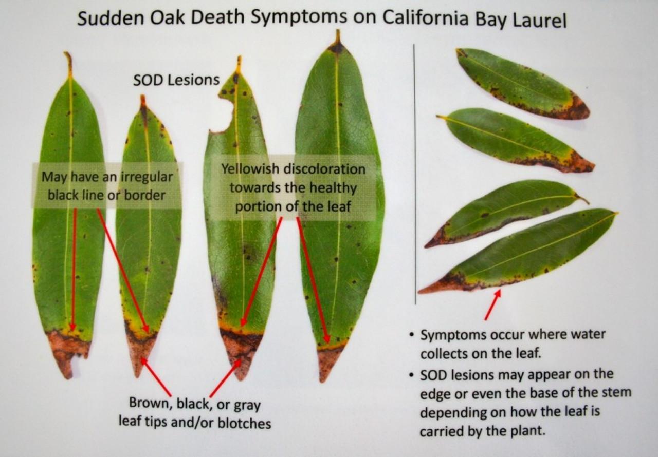 Reliant + Pentra-Bark Sudden Oak Death Combo 1 Gallon/8oz (Agri-Fos/Garden Phos)