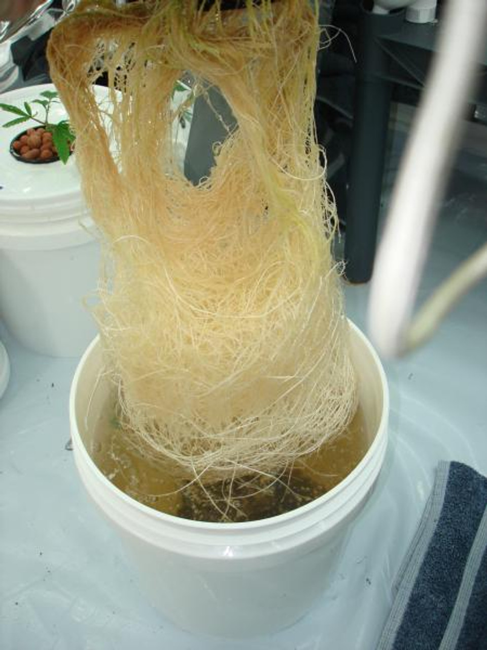 Mycostop Biofungicide WP 5 Gram Packet