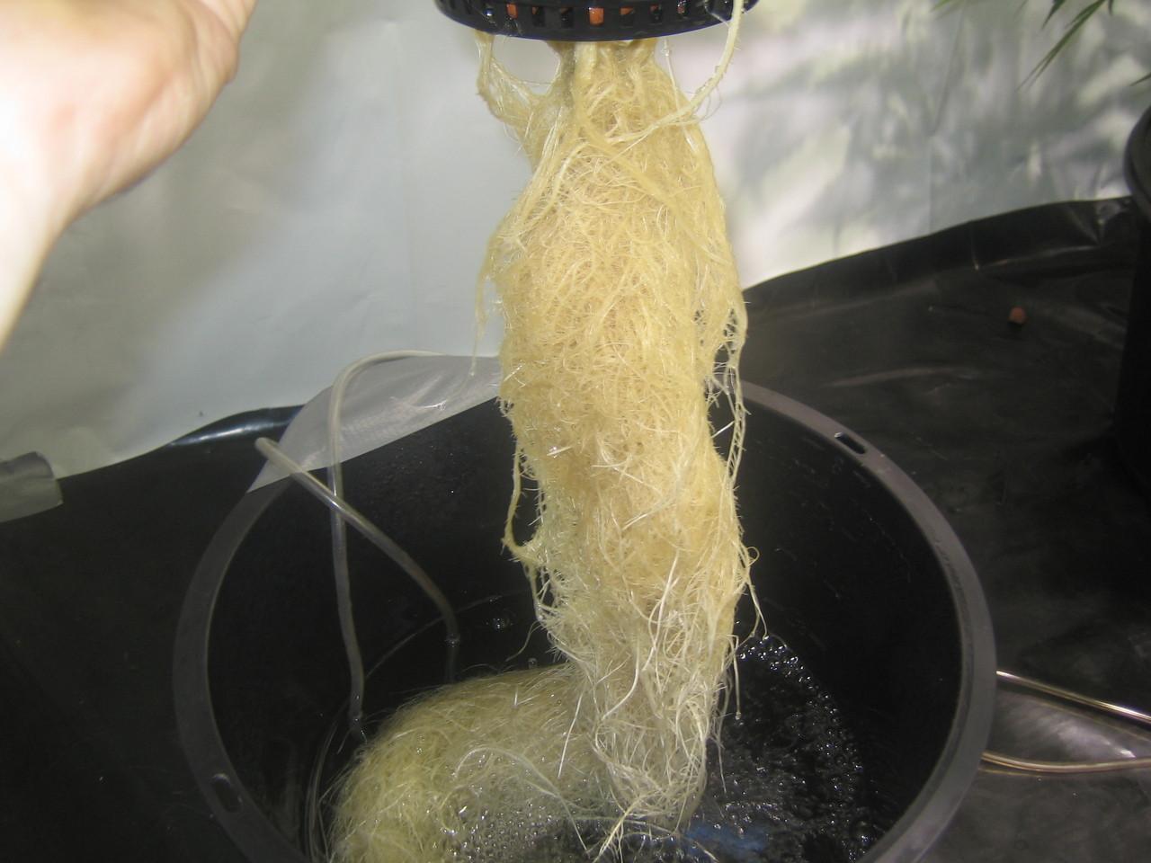 Mycostop Biofungicide WP 5 Gram