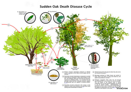 Reliant + Pentra-Bark Sudden Oak Death Treatment Package 1 Gallon/8oz (Agri-Fos/Garden Phos)