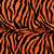 Zebra Orange and black