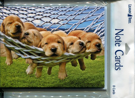 Puppies - Notecards